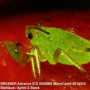 Мікроскоп Bresser Advance ICD 10x-160x