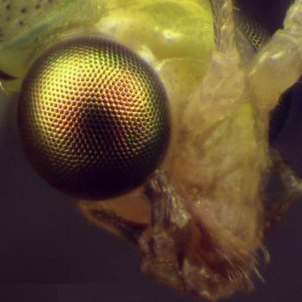 Микроскоп Bresser Advance ICD 10x-160x